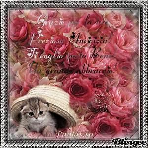 Per te carissima e preziosa amica papuzzetto p fotografia for Amica ger te