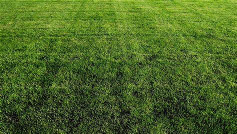 what type of grass is sod turfgrass entomology and applied ecology laboratory