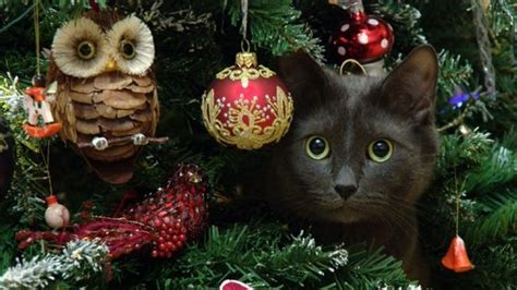 tips     cats   christmas trees youtube