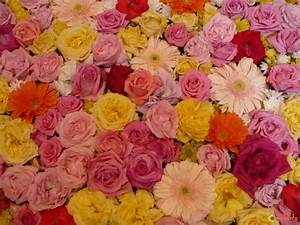 photo tapis de fleurs a cordoue With tapis à fleurs