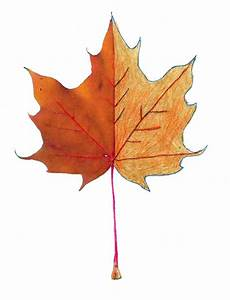 Leaf Drawing Template - ClipArt Best