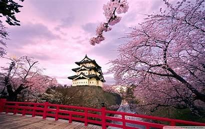 Blossom Cherry Desktop Wide Wallpapertag