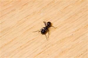ameisen im garten vernichten ameisen im garten vernichten With französischer balkon mit was tun gegen schachtelhalm im garten