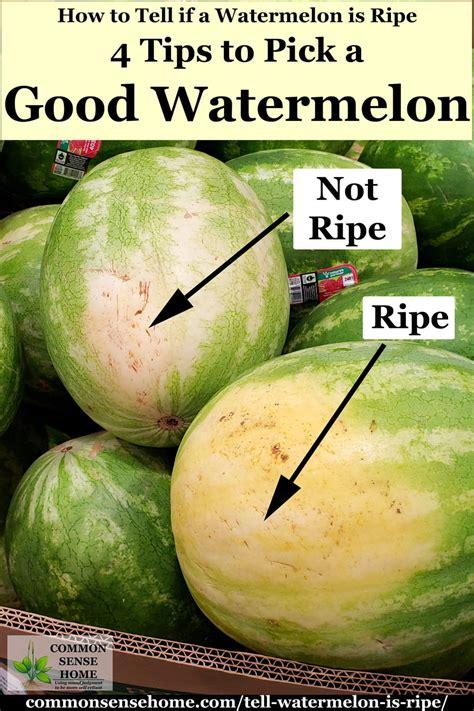 watermelon  ripe  tips  pick