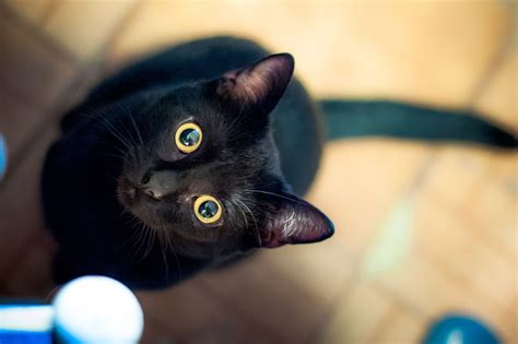 cat cats cute famous unlucky kitties why instagram getty ways kitty pets considered thursday