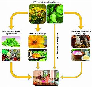 Four ways of how PA can enter the human food chain ...