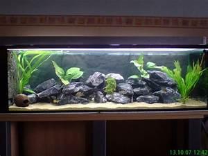 Aquarium Einrichten Anfänger : aquarium einrichten beispiele ~ Lizthompson.info Haus und Dekorationen