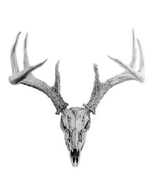 Deer Skull Paintings For Sale