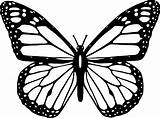 Butterfly Coloring Pages Monarch Sheets sketch template