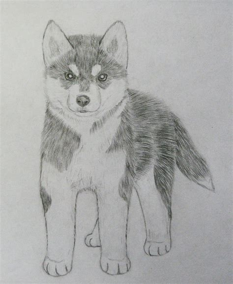 cute husky puppy drawing puppies images litle pups