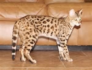 f2 cat f2 cat select exotics part 2