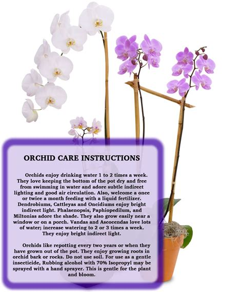care for orchids billy heroman s blog