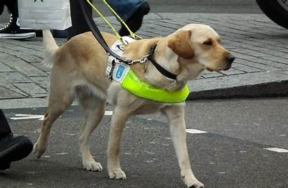 Guide Dog Dogs Charity Warning Owners Gedling