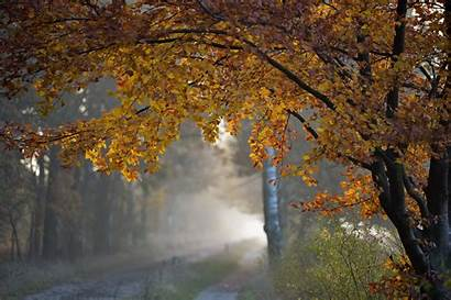 Rainy Fall Road Autumn Leaves Forest Wallpapers