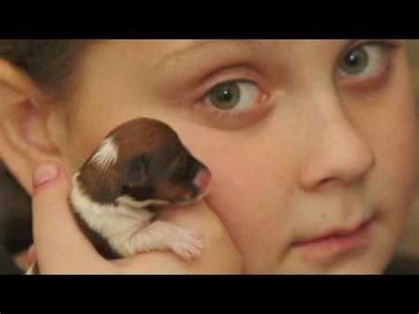 le monde du bureau le plus petit chien du monde