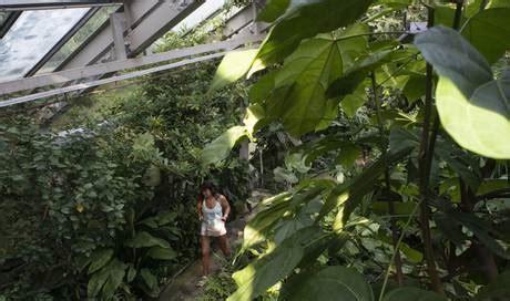 Bruno Erny Botanischer Garten Basel by Die Uni Basel Plant Ein Neues Tropenhaus Basel Stadt