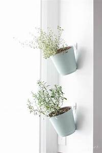 indoor hanging planters Indoor Hanging Planters Pictures, Photos, and Images for ...