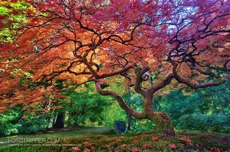 shoot portland japanese garden fototripper