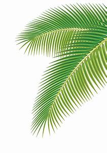 Set of green Palm leaves vector 01 - Vector Plant free ...