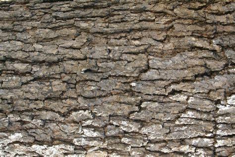 birch bark wallpaper  texture wallpapersafari
