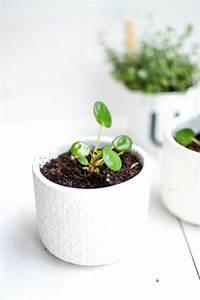 Pilea Pflanze Kaufen : blumentpfe kaufen great full size of ubertopfe gross ~ Michelbontemps.com Haus und Dekorationen