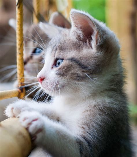 Kitten Images Before You Get A Kitten Jackson Galaxy Store