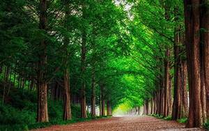 Free, Download, Hd, Background, Green, Forest, Trees, Straight, Road, Wallpaper, 3840x2400, For, Your