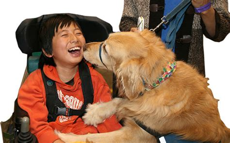 how do animals help humans 6 unique ways dogs help humans pets world