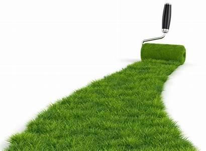 Grass Roller Paint Lawn Roll Winter Care