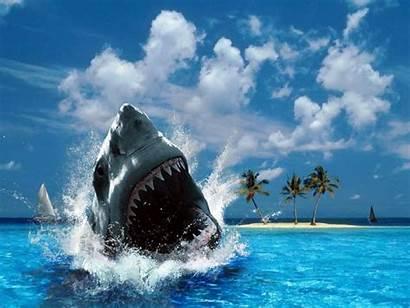 Desktop Backgrounds Wallpapers Action Pc Shark Shot