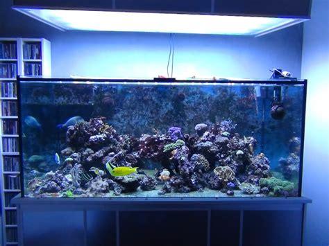 aquarium recifal vendre
