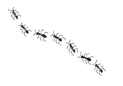 de fourmis dans la cuisine avril 2008