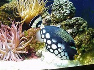 Optimale Aquarium Temperatur : ideal saltwater aquarium temperature ~ Yasmunasinghe.com Haus und Dekorationen
