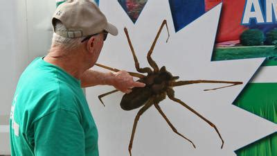extreme case  brown recluse spiders drives owners