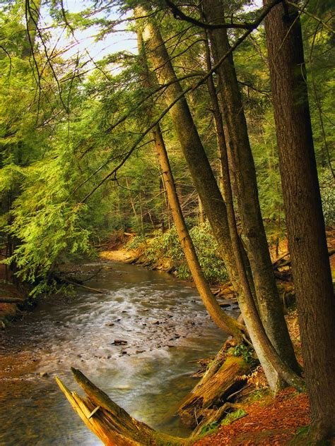 cook forest state park attractions