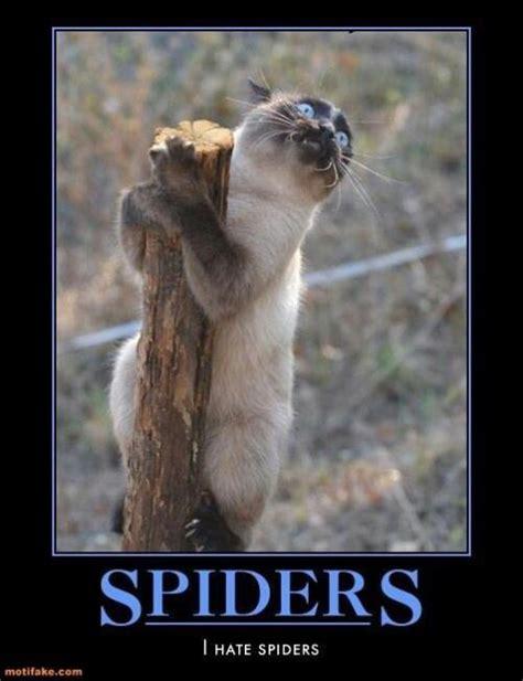 Afraid Of Spiders Meme - fear of spiders meme slapcaption com arachnophobia pinterest