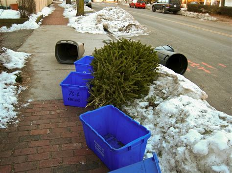 waste management christmas trees when can i throw out my tree levittownnow