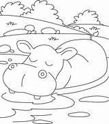 Hippopotamus Nilpferd Kolorowanki Hipopotam Azcoloring Germs Kolorowanka Loadtve Druku sketch template