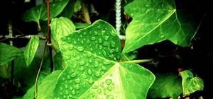 Negative Energie Im Haus : 9 pflanzen die positive energie in deinem haus kreieren altermed zentrum ~ Frokenaadalensverden.com Haus und Dekorationen