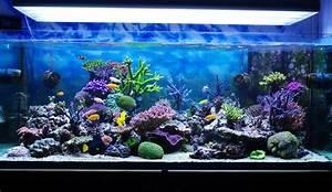Tiere Für Aquarium : beleuchtung f r aquarien und terrarien lampe magazin ~ Lizthompson.info Haus und Dekorationen
