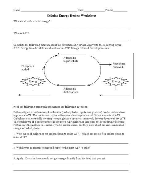Atp Worksheet Free Worksheets Library  Download And Print Worksheets  Free On Compraren
