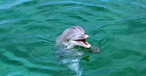 Beautiful Wallpapers and Images: Beautiful Dolphin ...