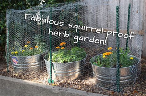 how to keep squirrels out of your garden how to plant an herb garden to keep squirrels out s
