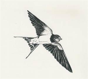 Swallow Bird Drawing