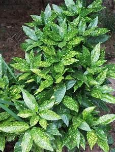 Pflanzen Für Schattengarten : farbenfrohe b sche f r ihren garten immergr n farbenfroh und pflanzen ~ Sanjose-hotels-ca.com Haus und Dekorationen
