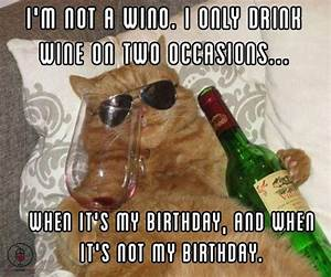 funny cat memes | Listen to the Wine Cat. It's Knows What ...