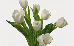 Beautiful white flowers - Mobile wallpapers