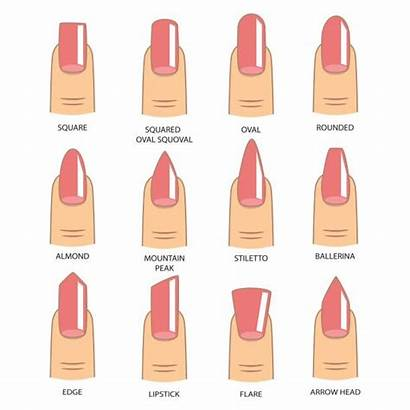 Nail Nails Shape Manicure Vector Shapes Different