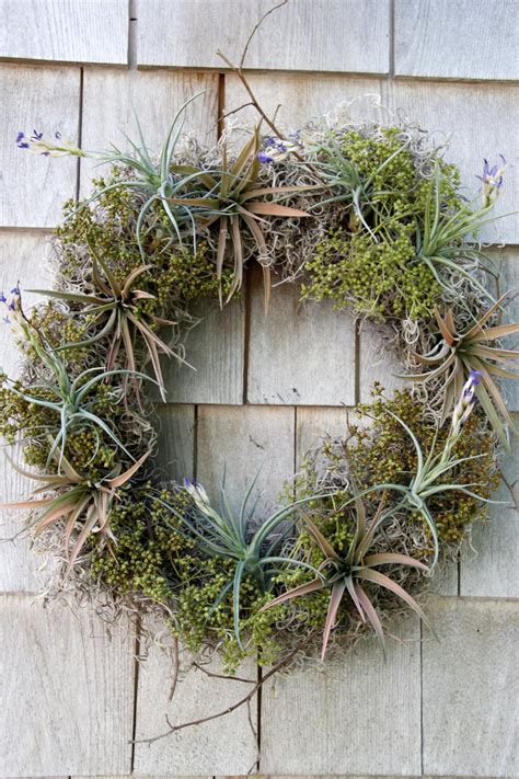 how to make air plants bloom diy airplant wreath hgtv