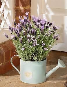 Plante D Intérieur : plantes d 39 int rieur parfum es une s lection s duisante ~ Dode.kayakingforconservation.com Idées de Décoration